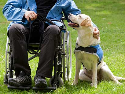a person in a wheelchair with their mobility assistance canine