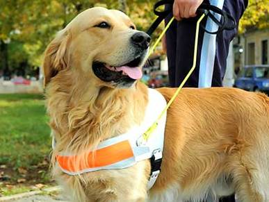 a hearing impaired person with his guide dog