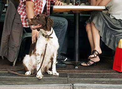 a person petting his medical alert k9 at a lunch table