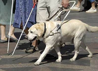 a blind person with his guide dog